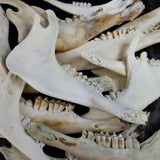 Lamb Jaw Halves