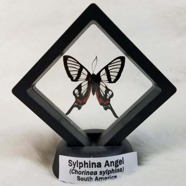 Sylphina Angel Butterflies