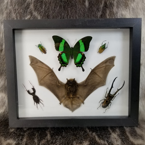 Bat and Beetles (Entomology Frame)