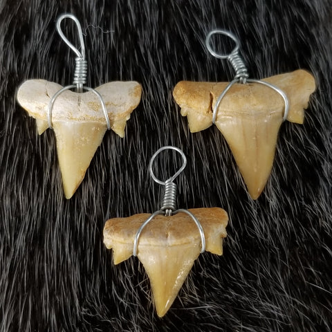 Fossil Shark Tooth Pendants