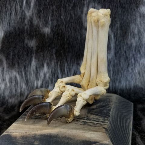 Articulated Wolf Paw (SALE)