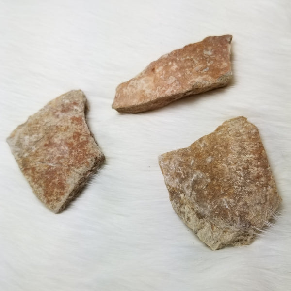 Fossil Turtle Shell Fragments