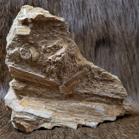 Mosasaur Bone Fragments
