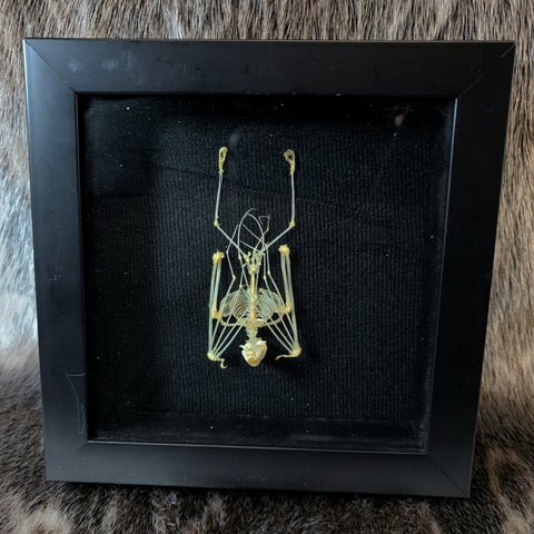 Articulated Hanging Bat Skeletons (SALE)