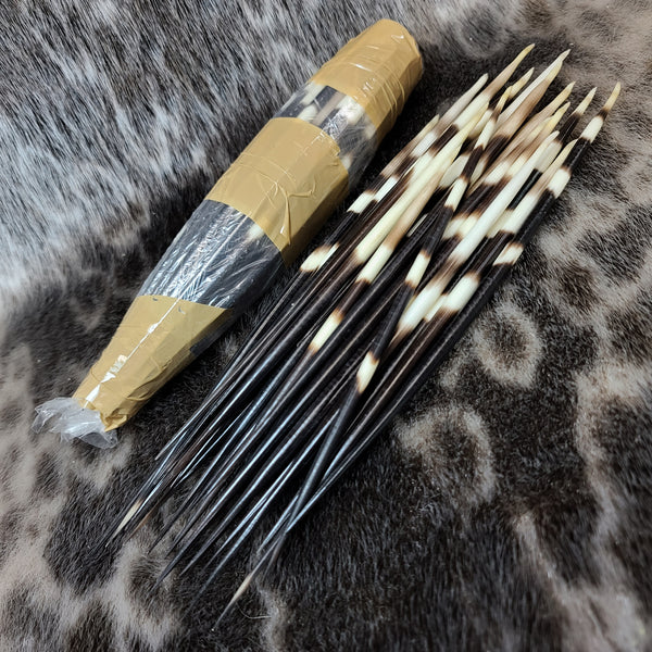 Giant African Porcupine Quill Packs (50)