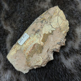 Oreodont Fossil Jaw (CLEARANCE)
