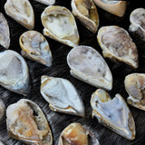 Fossil Seashell Geodes (SALE)