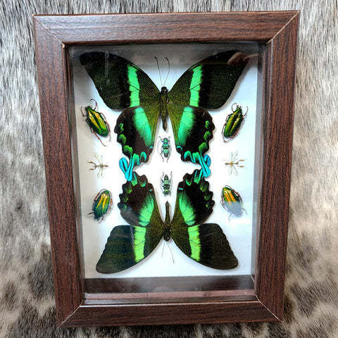 Peacock Swallowtail Butterfly, Mantis & Beetle Frame