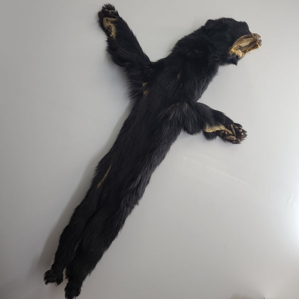 Little Black Bear Skin, Taxidermy-Ready (5ft)