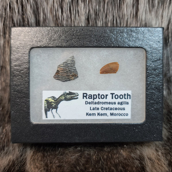 Raptor Tooth & Eggshell Set