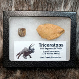 Triceratops Frill and Tooth Set
