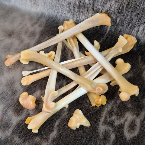 Canadian Lynx Bone Set