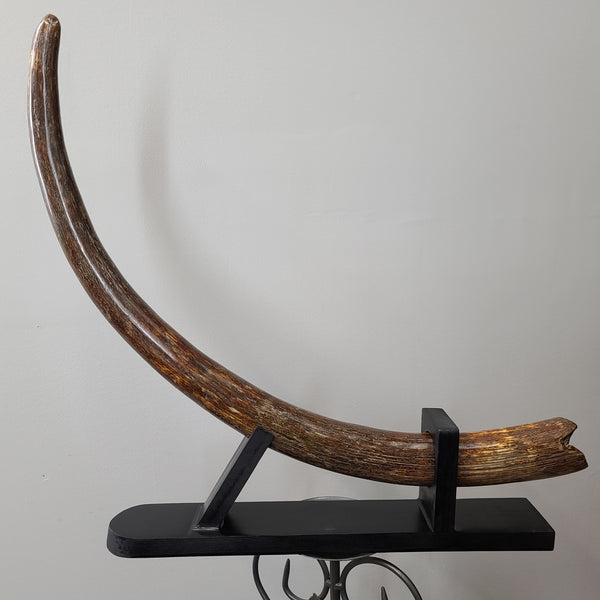 "Woolly Mammoth Tusk B, 28"" (SALE)"