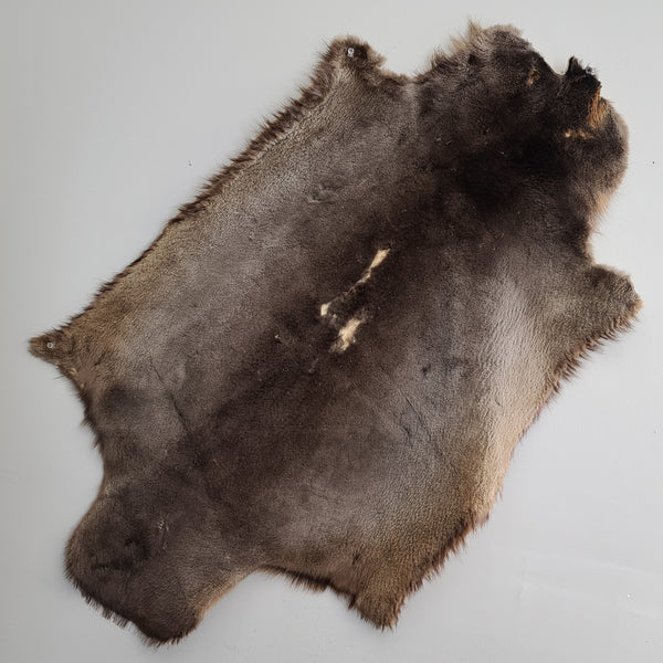 North American Beaver Fur, Sheared (CLEARANCE)