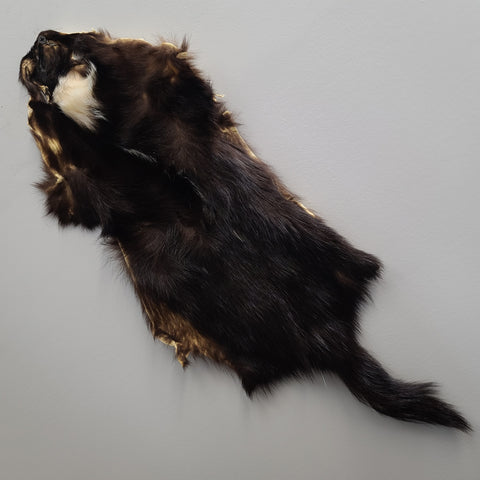 Skunk Fur, Salvaged