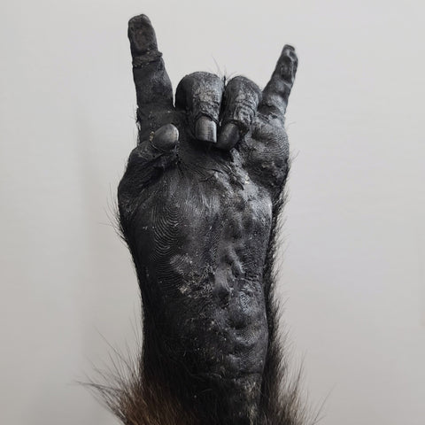 """Lucky Monkey"" Paw (Chacma Baboon), Rock On"