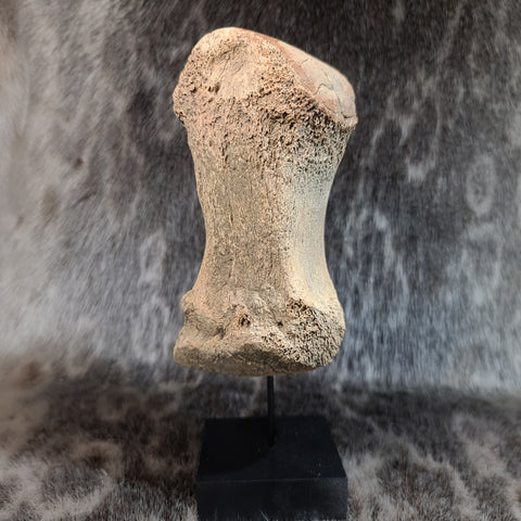 Woolly Mammoth Toe Bone E (ON STAND)
