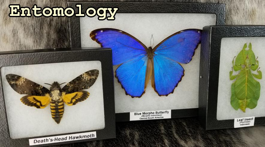 Insects & Entomology