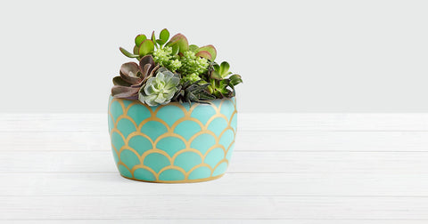 succulent garden mothers day gift ideas