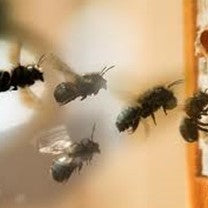 Mason Bee Products