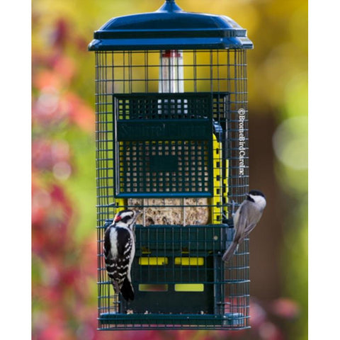 ***NEW*** Brome Squirrel Buster Suet Feeder