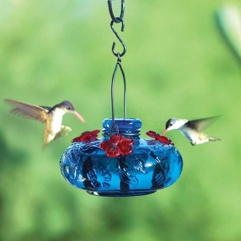 Parasol Bloom Calliope Hummingbird Feeder Backyard Bird