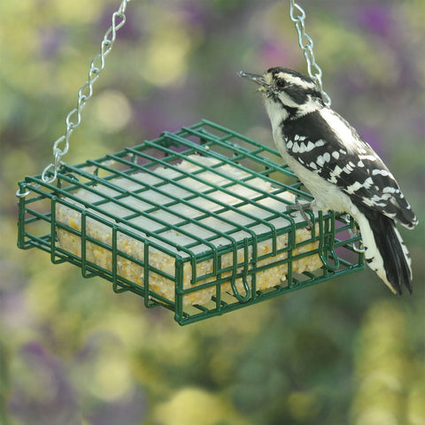 Image of Songbird Essentials Deluxe Suet Feeder