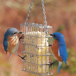 Droll Yankees Stainless Steel Suet Feeder