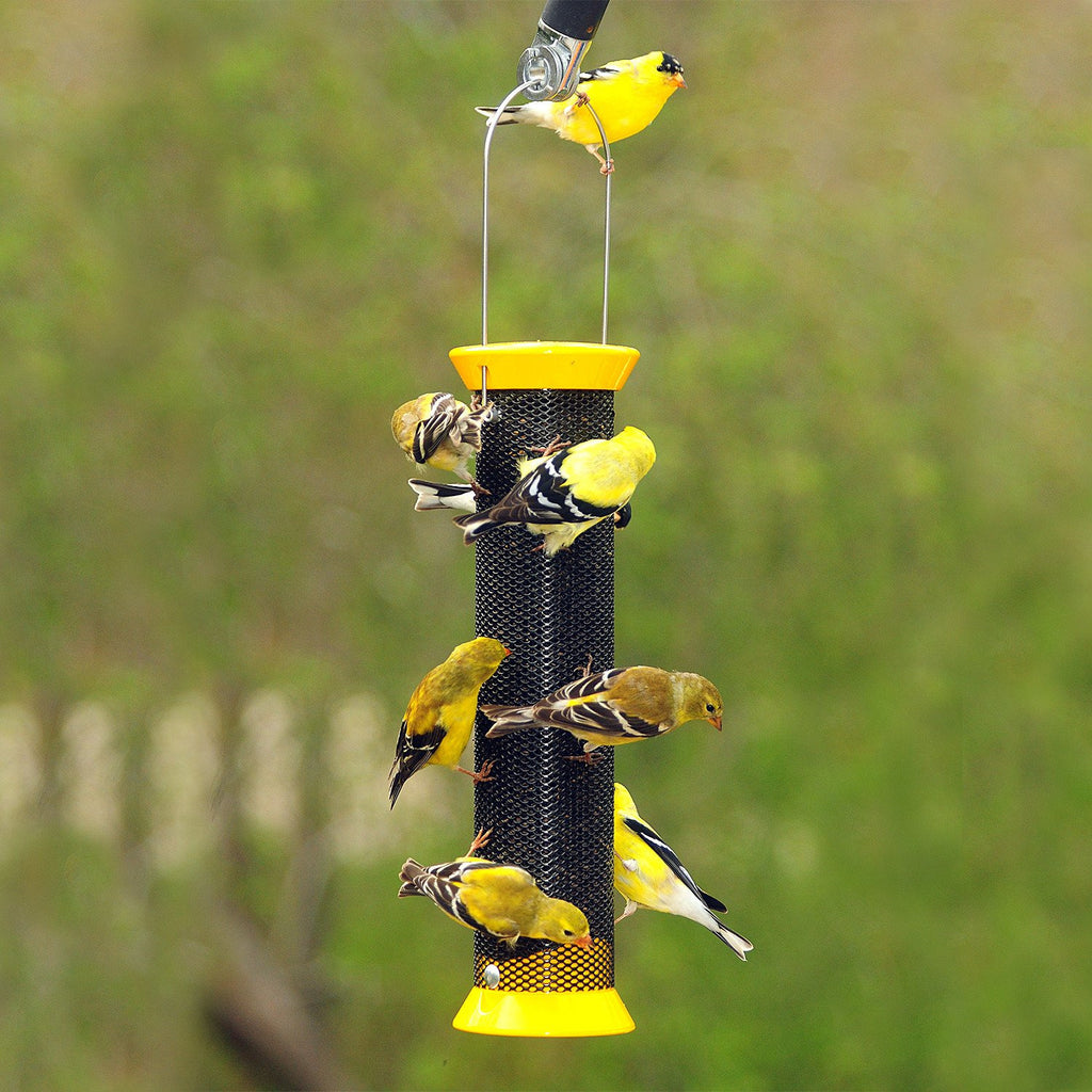 top redpolls feeders know pi feeder zen the birdfeeder to things about seed niger thistle