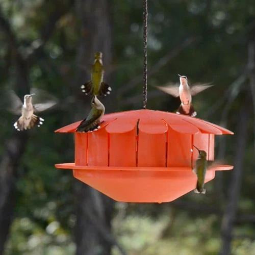 Humm-Bug Natural Hummingbird Protein Feeder