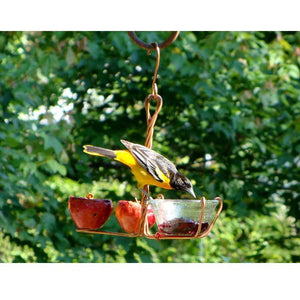 Fruit and Jelly Oriole Feeder