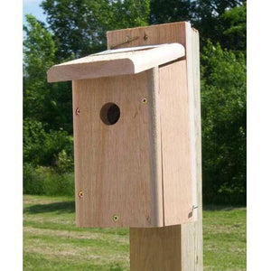 Songbird Essentials Chickadee Bird House