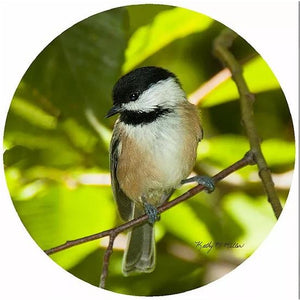 Andreas Silicone Trivet - Spring Chickadee