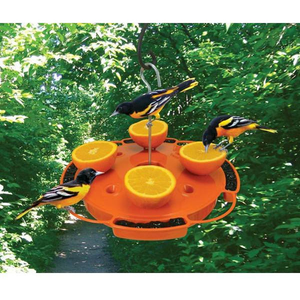 Ultimate Oriole Feeder