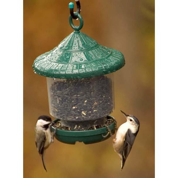 awesome clingers only feeder bird seed feeders bird feeders clingers only bird feeder 755