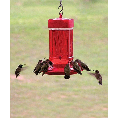 Image of First Nature Hummingbird Feeder