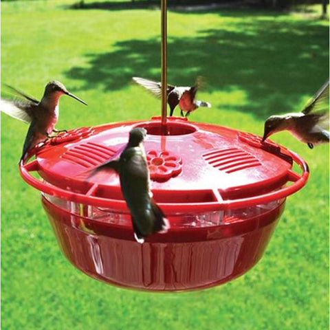 Humm-Yumm Protein Plus Hummingbird Feeder
