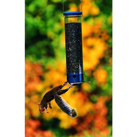Image of Droll Yankee Whipper Squirrel Proof Bird Feeder