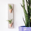Carter & Rose Wall Planter, Blush Collection