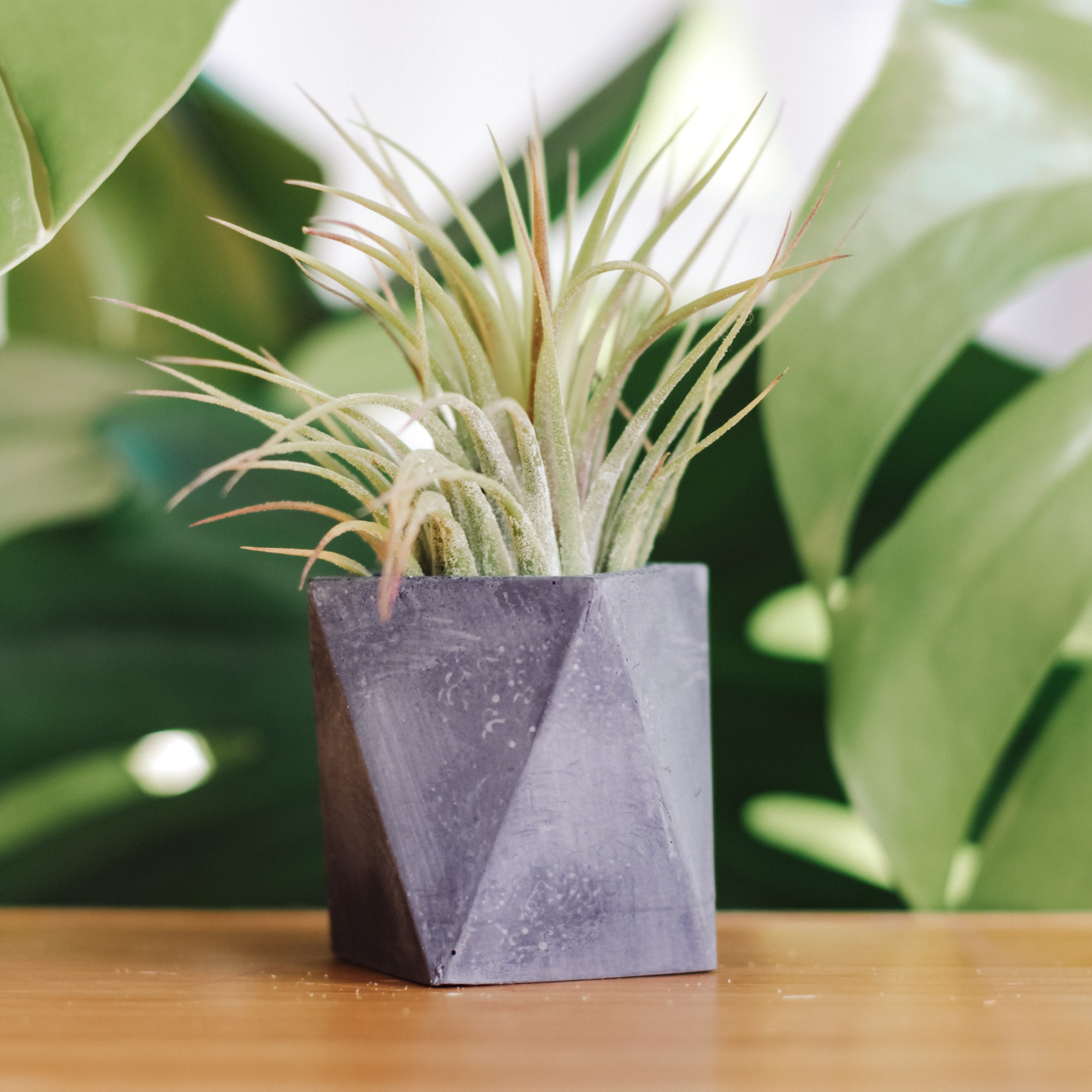 Concrete Days, Mini Triangle Planter
