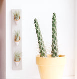 Carter & Rose Wall Planter, Speckled White Collection