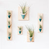 Carter & Rose Wall Planter, Teal Collection