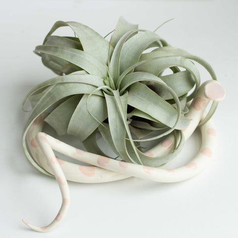 ceramic snake plant holder - large