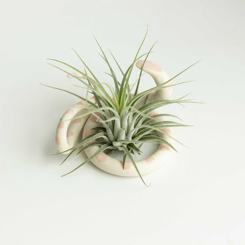 ceramic snake plant holder - medium
