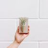 Carter & Rose Wall Planter, Pistachio Collection