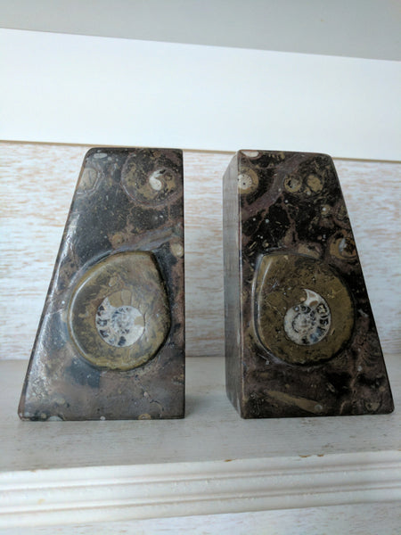 Ammonite Fossil Bookends