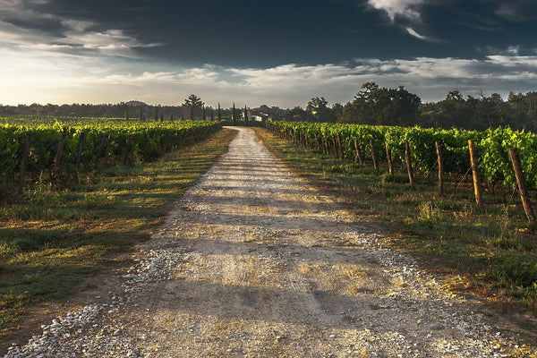 wine trends-country lane