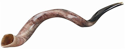 Ultimate Judaica Kosher Shofar Yemenite Horns - Shofar Size X-Large - 34.6 inch -37.4 inch