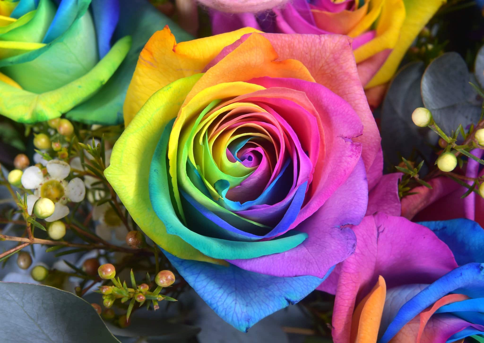 Dozen Rainbow Rose Water Bouquet