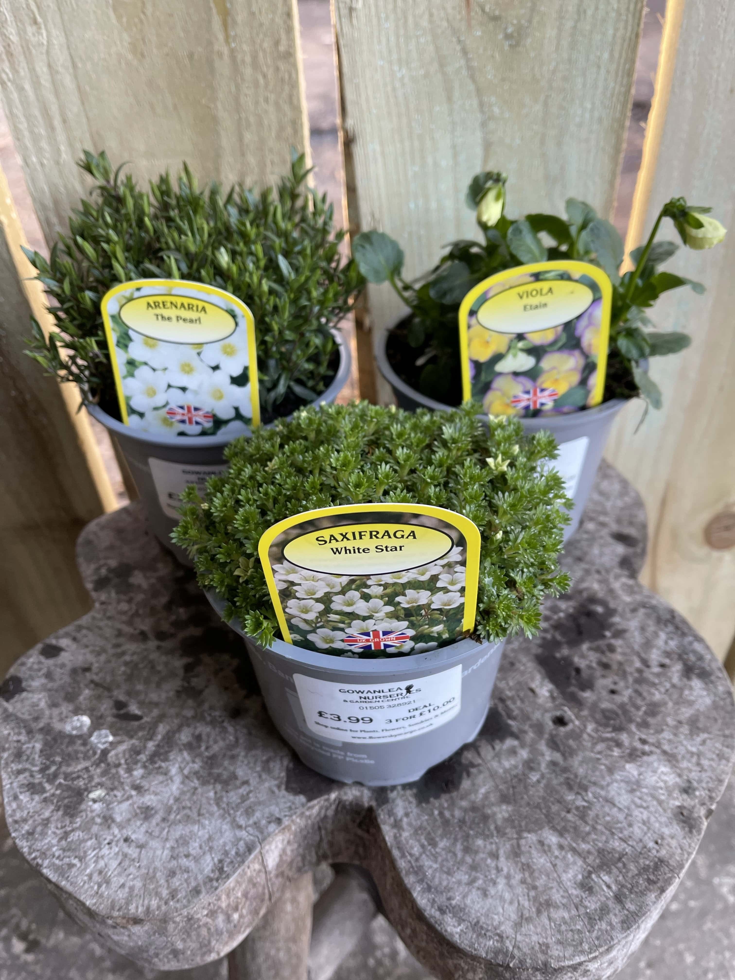 3x Alpines Large (mixed)